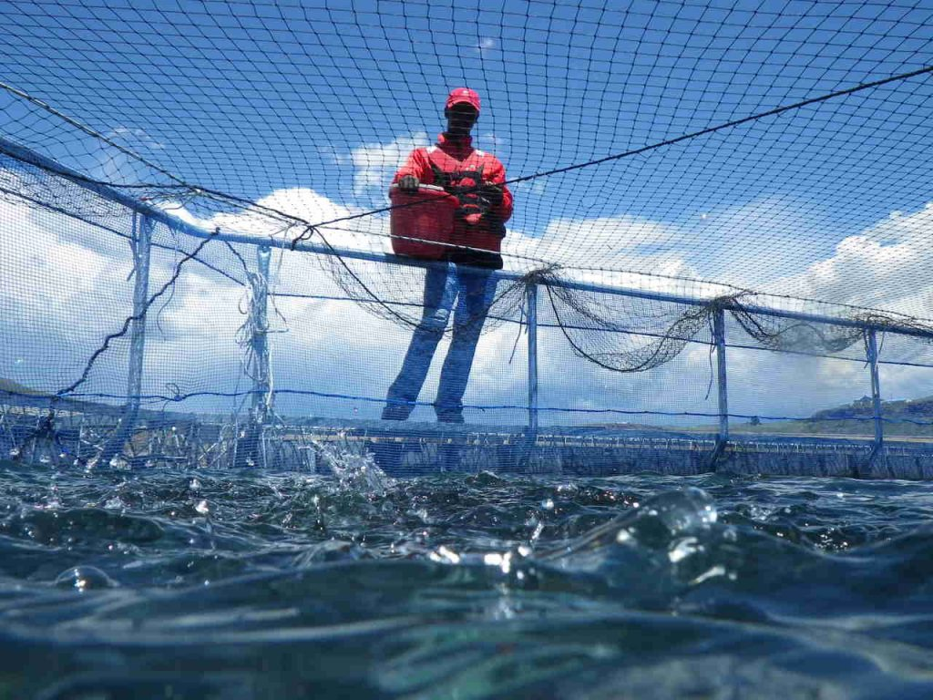 Aquaculture business modeling- Advance Africa 1